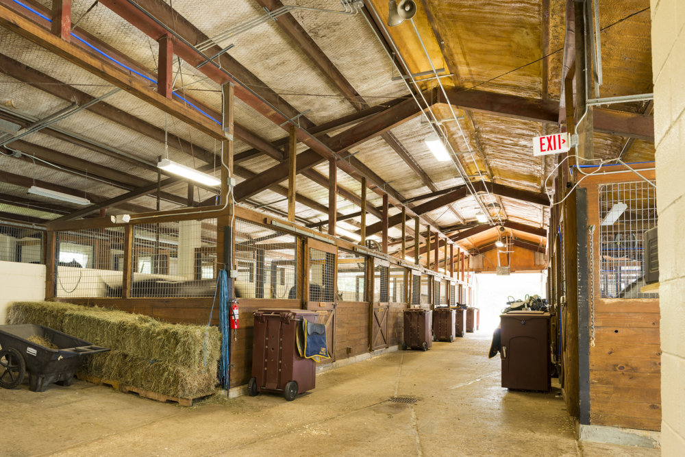 Scnz Nopd Stables Web Ready 5